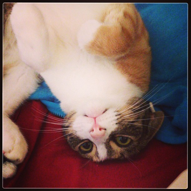 cat upside down
